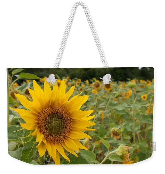 Sun Flower Fields Weekender Tote Bag