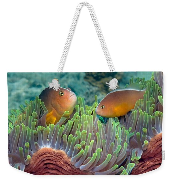 Two Skunk Anemone Fish And Indian Bulb Weekender Tote Bag