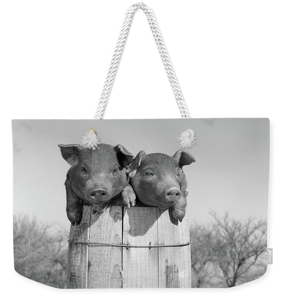 1950s Two Duroc Pigs Piglets In A Nail Weekender Tote Bag