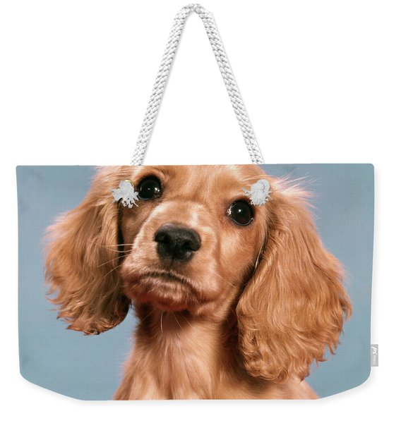 1960s Cute Cocker Spaniel Puppy Looking Weekender Tote Bag