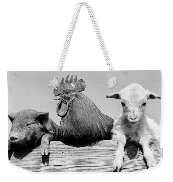 1960s Piglet Rooster Lamb Trio Leaning Weekender Tote Bag
