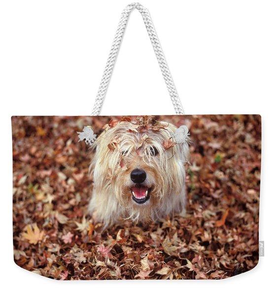 1990s Dog Covered In Leaves Weekender Tote Bag
