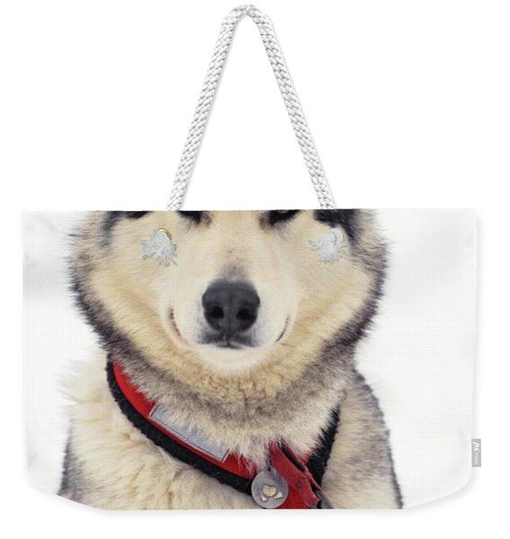 1990s Malamute Canis Lupus Familiaris Weekender Tote Bag