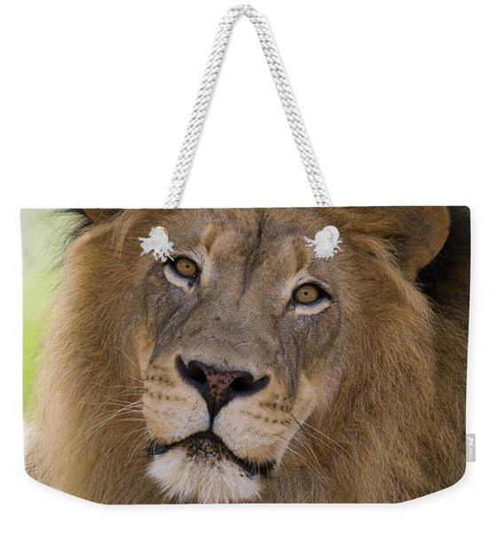 African Lion Male Weekender Tote Bag