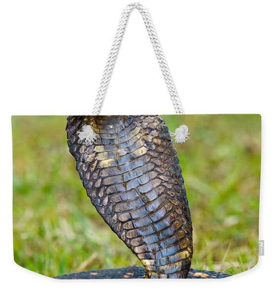Close-up Of An Egyptian Cobra Heloderma Weekender Tote Bag