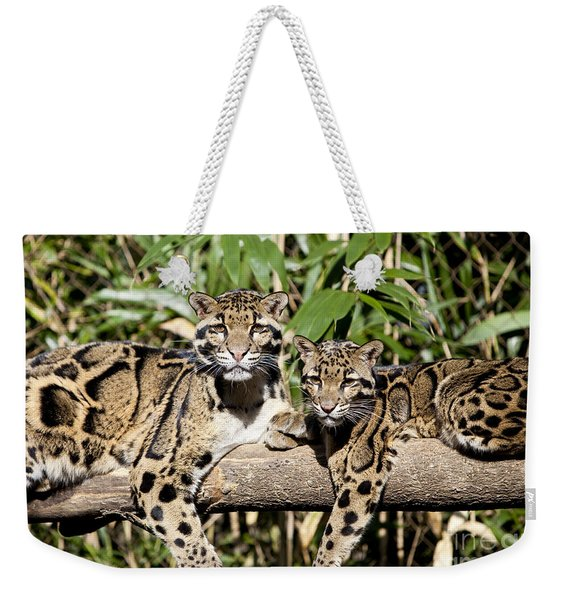 Weekender Tote Bag featuring the photograph Clouded Leopards by Brian Jannsen
