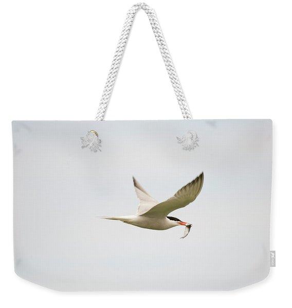 Common Tern, Sterna Hirundo, On Eastern Weekender Tote Bag