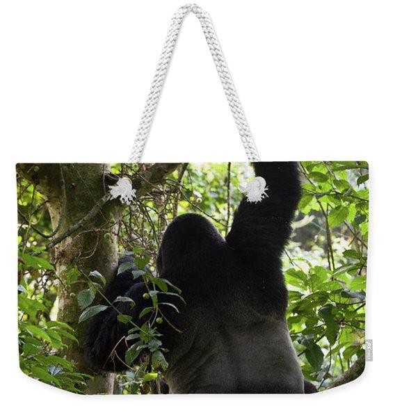 Mountain Gorilla Gorilla Beringei Weekender Tote Bag