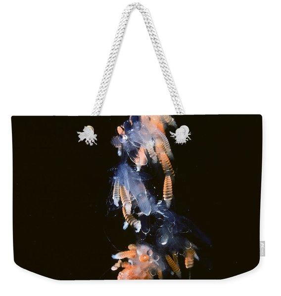Siphonophore Stephonomia Sp Weekender Tote Bag