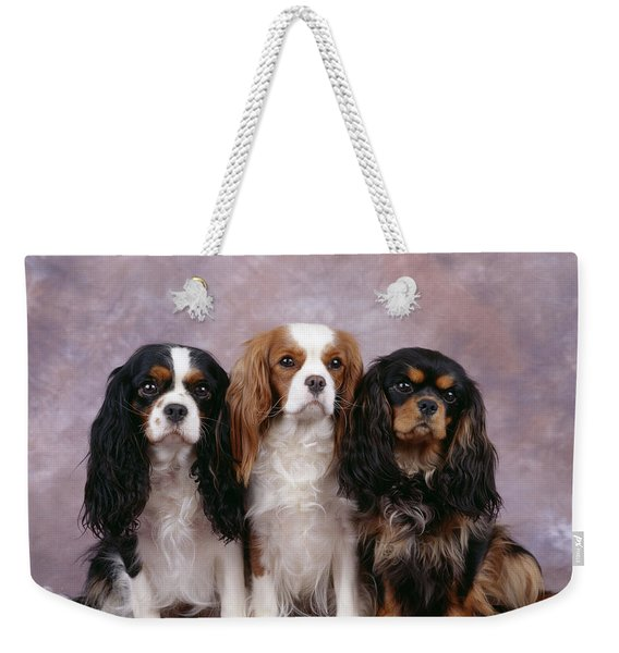 Cavalier King Charles Spaniels Weekender Tote Bag