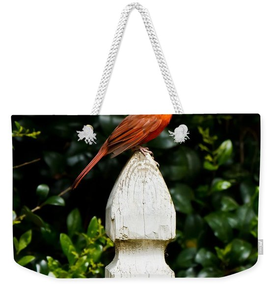 Male Cardinal Weekender Tote Bag