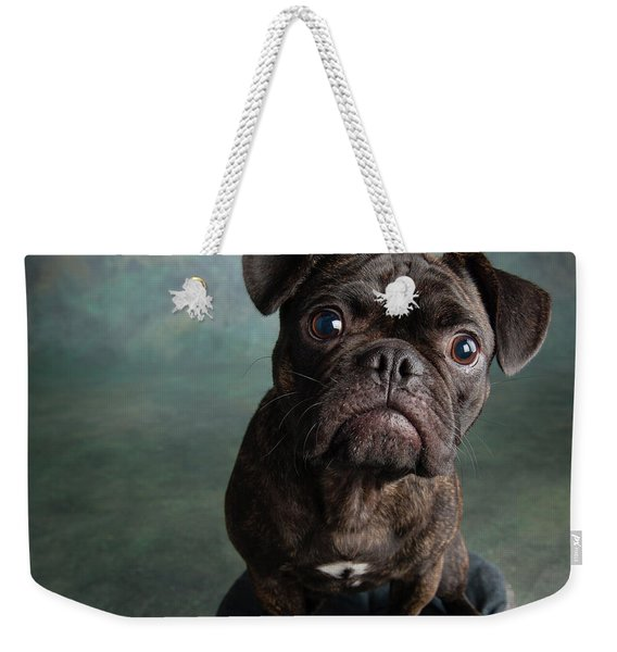 Portrait Of Pug Bulldog Mix Dog Weekender Tote Bag