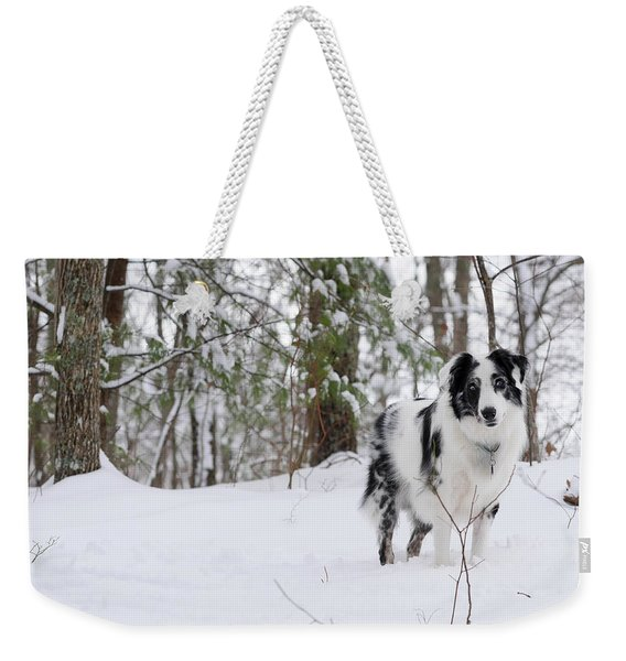 A Black And White Australian Shepherd Weekender Tote Bag