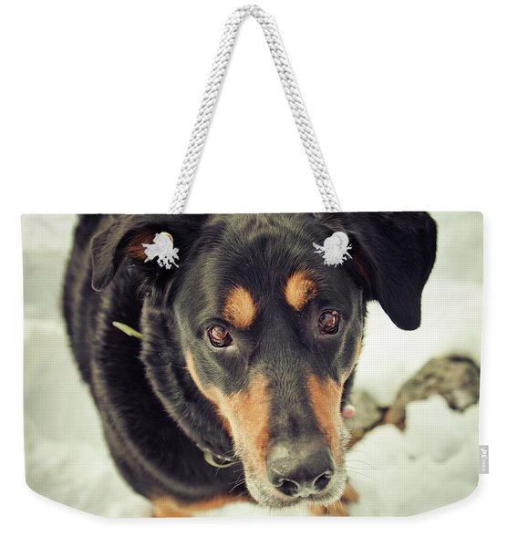 A Dog Looks Up At His Owner Weekender Tote Bag