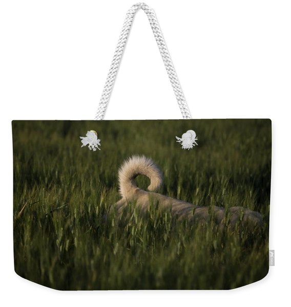A Dog Walks Through A Wheat Field Weekender Tote Bag
