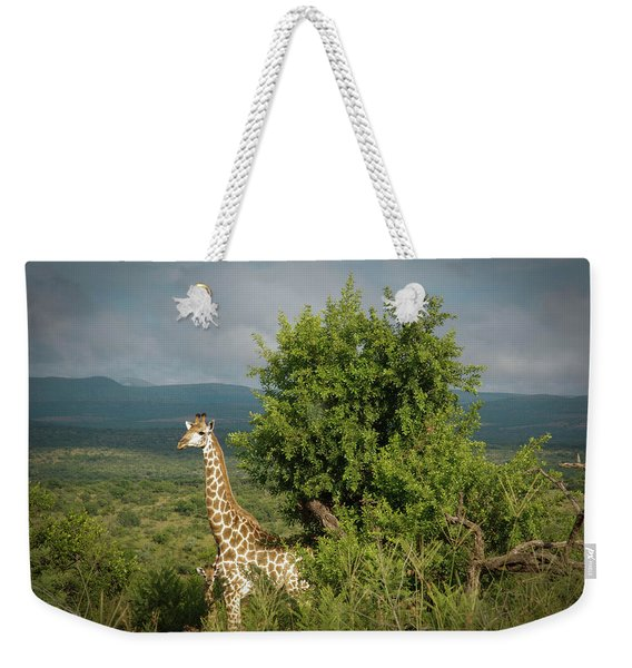A Giraffe And Her Offspring Weekender Tote Bag