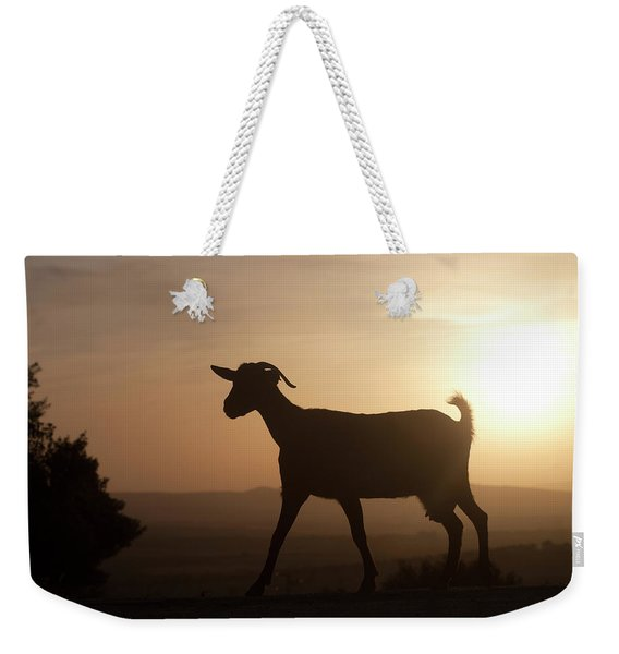 A Goat Walks At Sunset In Prado Del Weekender Tote Bag