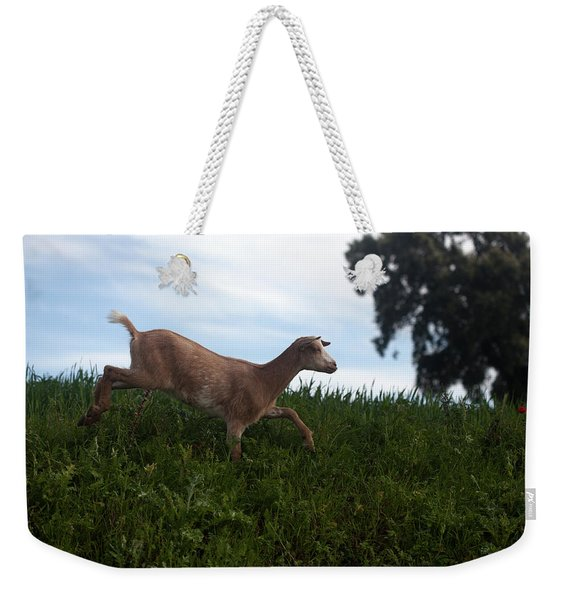 A Goat Walks Near A Monoculture Field Weekender Tote Bag