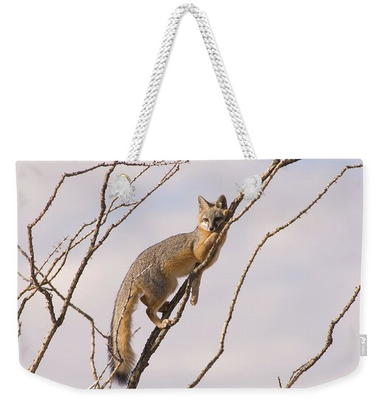 A Gray Fox In An Ocotillo Plant Looking Weekender Tote Bag
