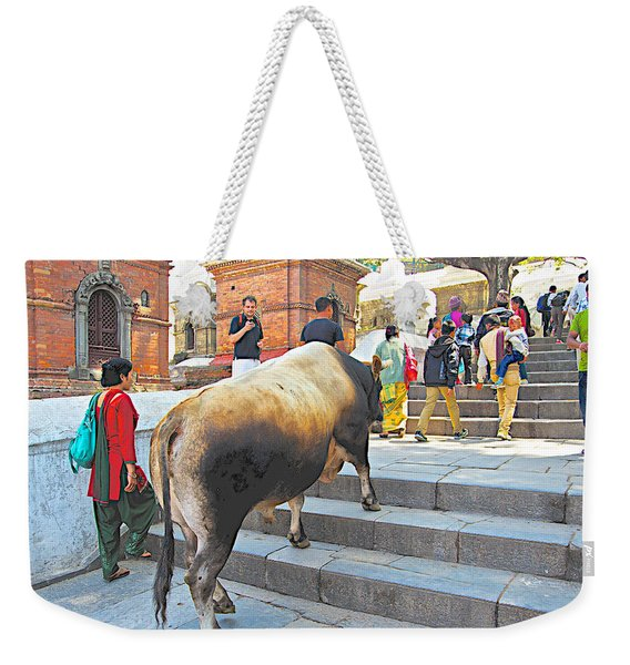 A Holy Cow Climbing Steps From Bagmati River In Kathmandu-nepal  Weekender Tote Bag