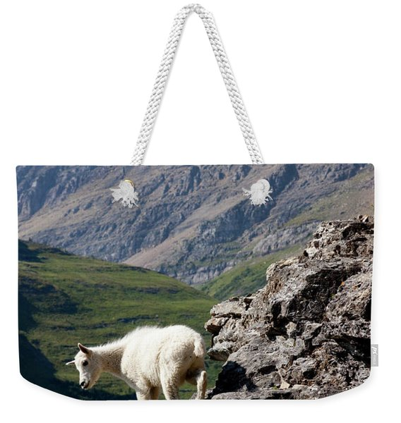 A Kid Mountain Goat In Glacier National Weekender Tote Bag