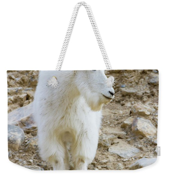 A Mountain Goat On Watch In The Big Weekender Tote Bag