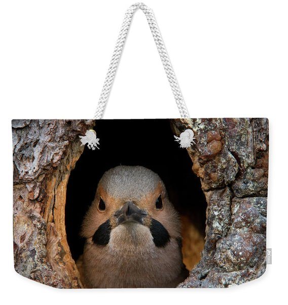 A Northern Flicker In The Hollow Weekender Tote Bag