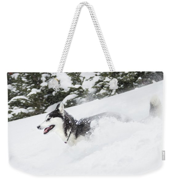 A One Year Old Siberian†husky Runs Weekender Tote Bag