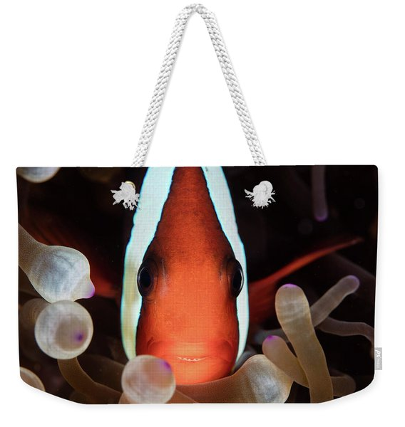 A Red And Black Anemonefish Swims Among Weekender Tote Bag