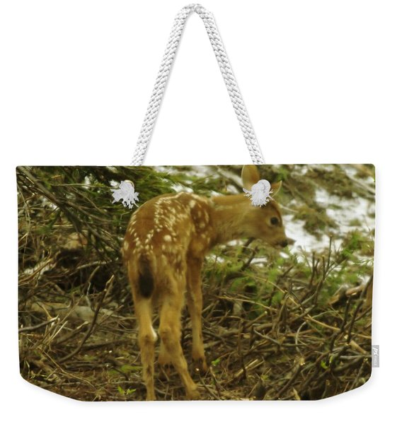A Young Fawn In The Spring Weekender Tote Bag