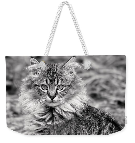 A Young Maine Coon Weekender Tote Bag
