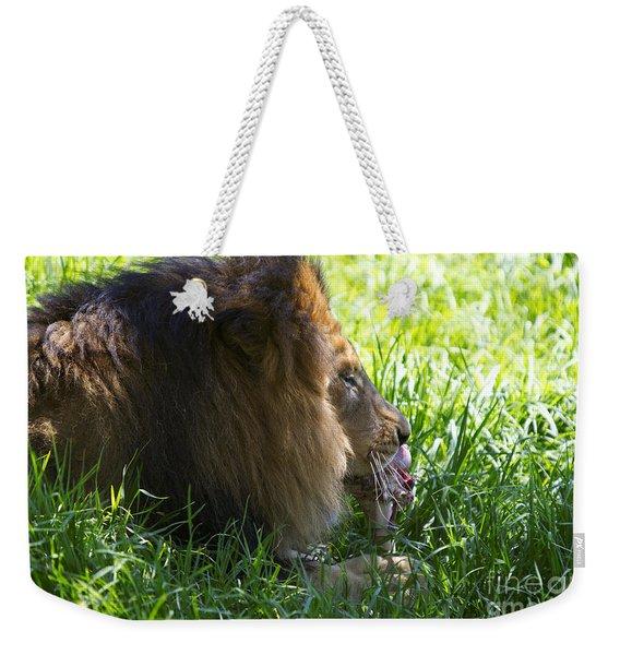 African Lion - Panthera Leo Weekender Tote Bag