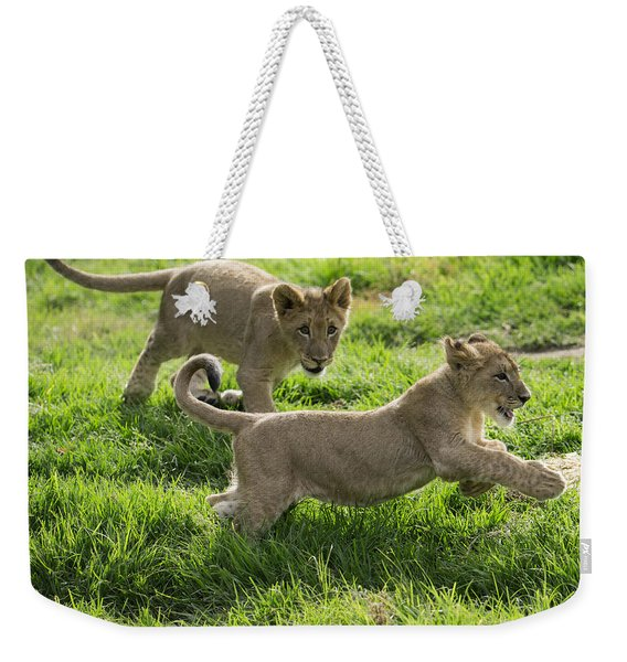 African Lion Cubs Playing Weekender Tote Bag