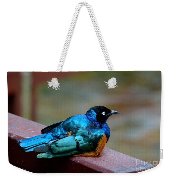 African Superb Starling Bird Rests On Wooden Beam Weekender Tote Bag