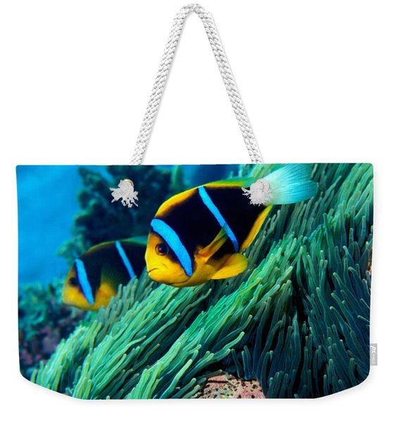 Allards Anemonefish Amphiprion Allardi Weekender Tote Bag