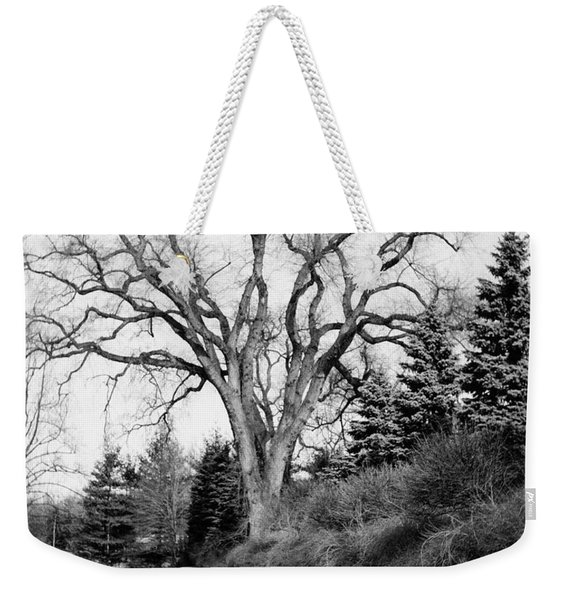An Elm Tree At The Side Of A Road Weekender Tote Bag