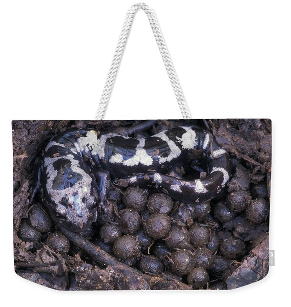 An Endangered Marbled Salamander Nests Weekender Tote Bag