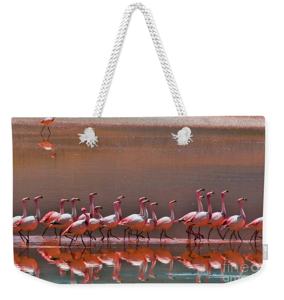 Andean Flamingoes Weekender Tote Bag