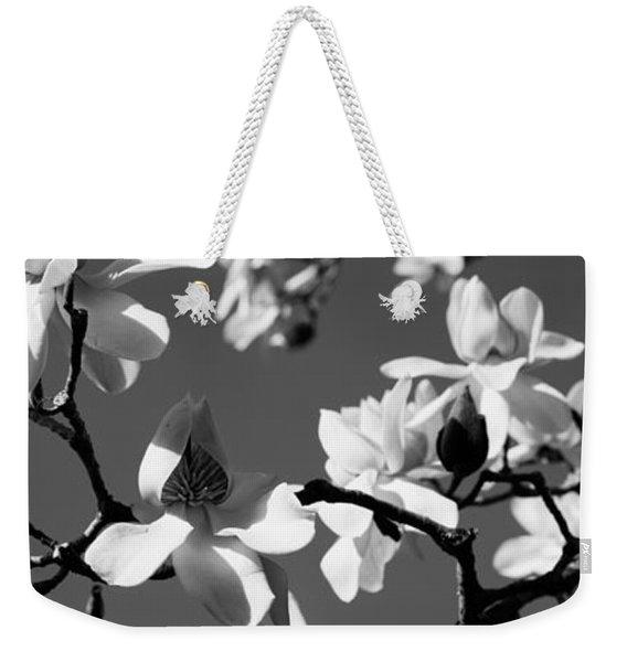 Asian Magnolia Blossoms Ca Weekender Tote Bag