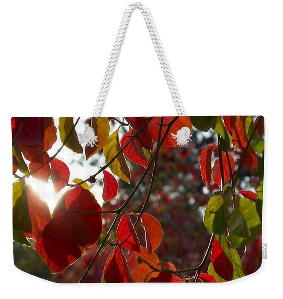 Autumn Dogwood In Evening Light Weekender Tote Bag