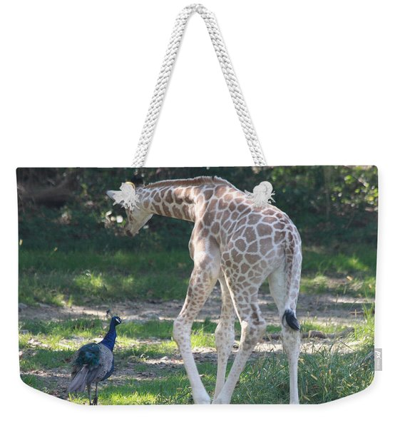 Baby Giraffe And Peacock Out For A Walk Weekender Tote Bag