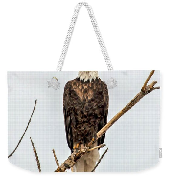 Bald Eagle On A Branch Weekender Tote Bag