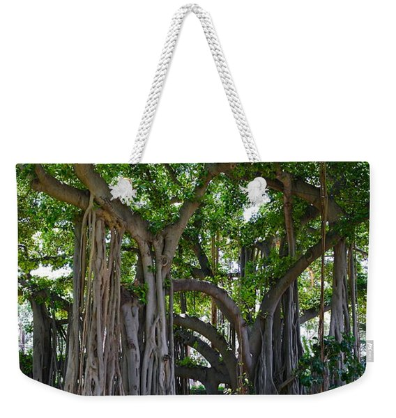 Banyan Tree At Honolulu Zoo Weekender Tote Bag
