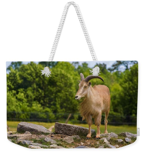 Weekender Tote Bag featuring the photograph Barbary Sheep by Garvin Hunter