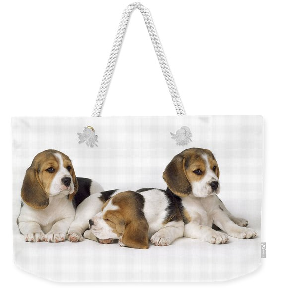 Beagle Puppies, Row Of Three, Second Weekender Tote Bag