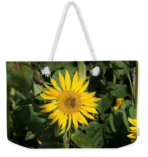 Bee On Sunflower, Baden-wurttemberg Weekender Tote Bag