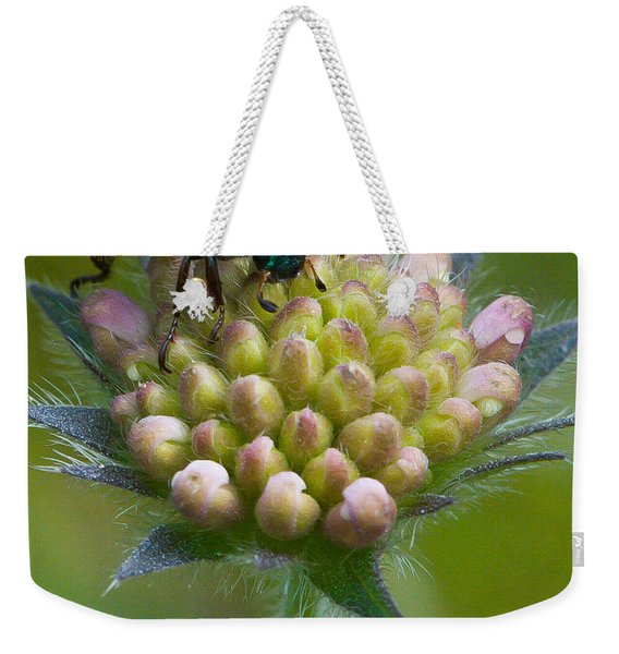 Weekender Tote Bag featuring the photograph Beetle Sitting On Flower by John Wadleigh