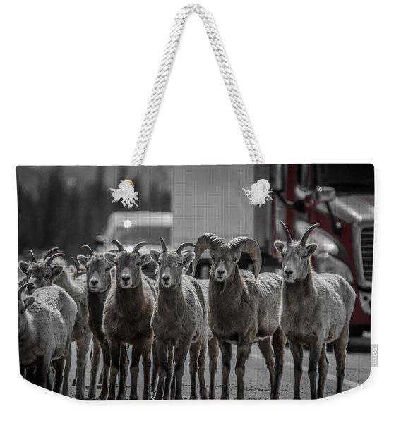 Big Horn Sheep Road Block Weekender Tote Bag