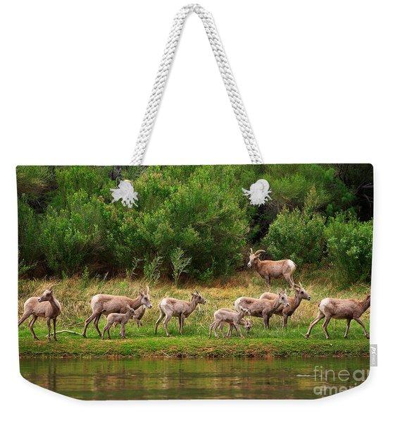 Bighorn Herd Weekender Tote Bag