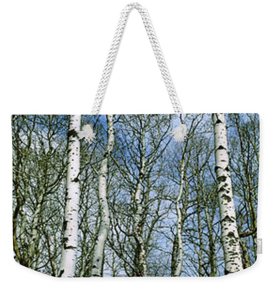 Birch Trees In A Forest, Us Glacier Weekender Tote Bag